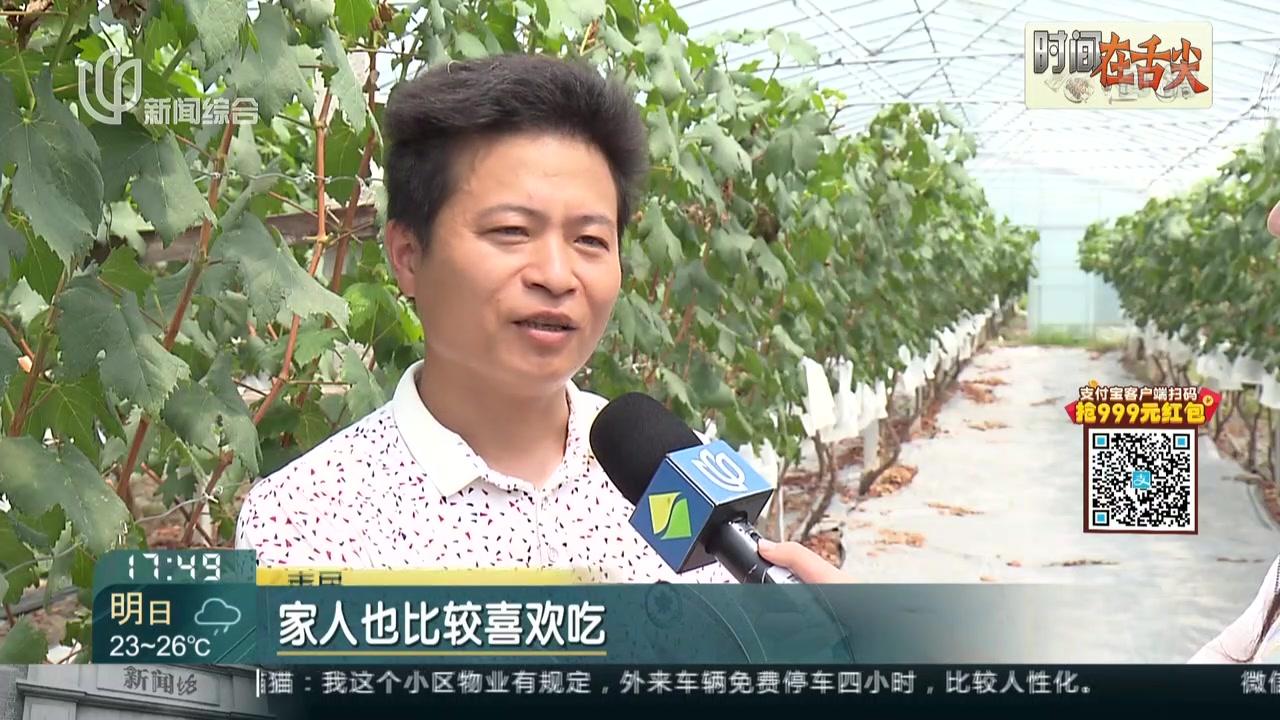 本地葡萄成熟上市  口感上乘品质好