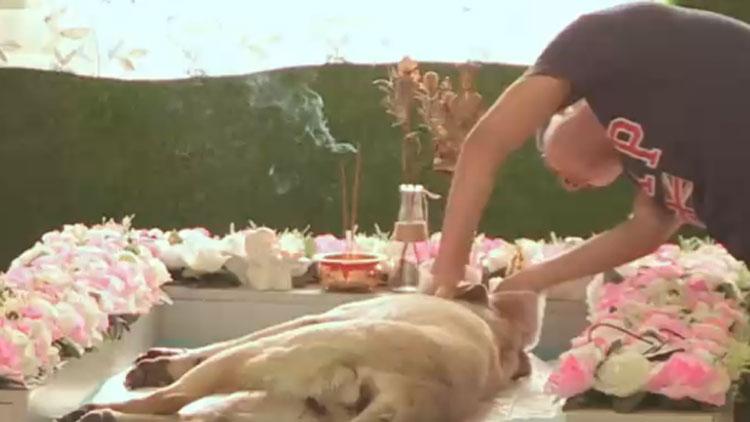 一场宠物的葬礼:这个时代的人狗情未了