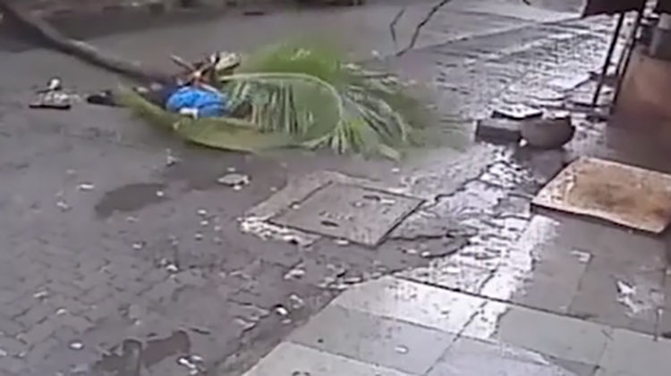 印度主持人被树砸中身亡 政府多次拒绝砍倒危树