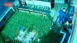 视频|花惹你了?恶劣男子闯入别人家肆意捣毁花园