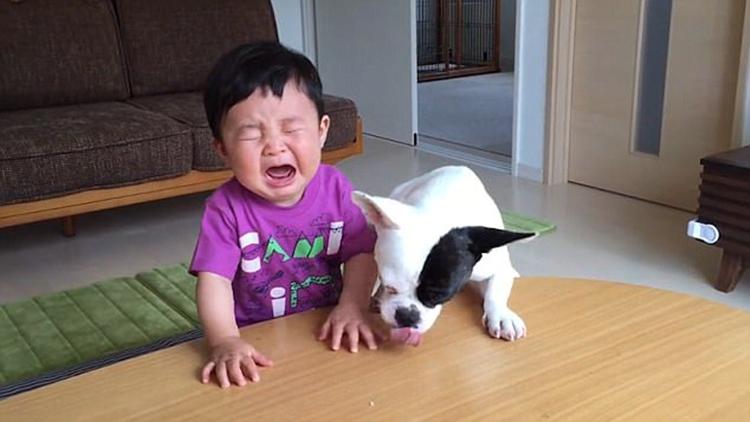 日本萌娃零食被狗偷吃气哭 狗狗一脸得意