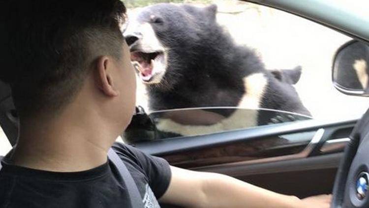 八达岭动物园公布熊咬人视频 游客:与事实不符
