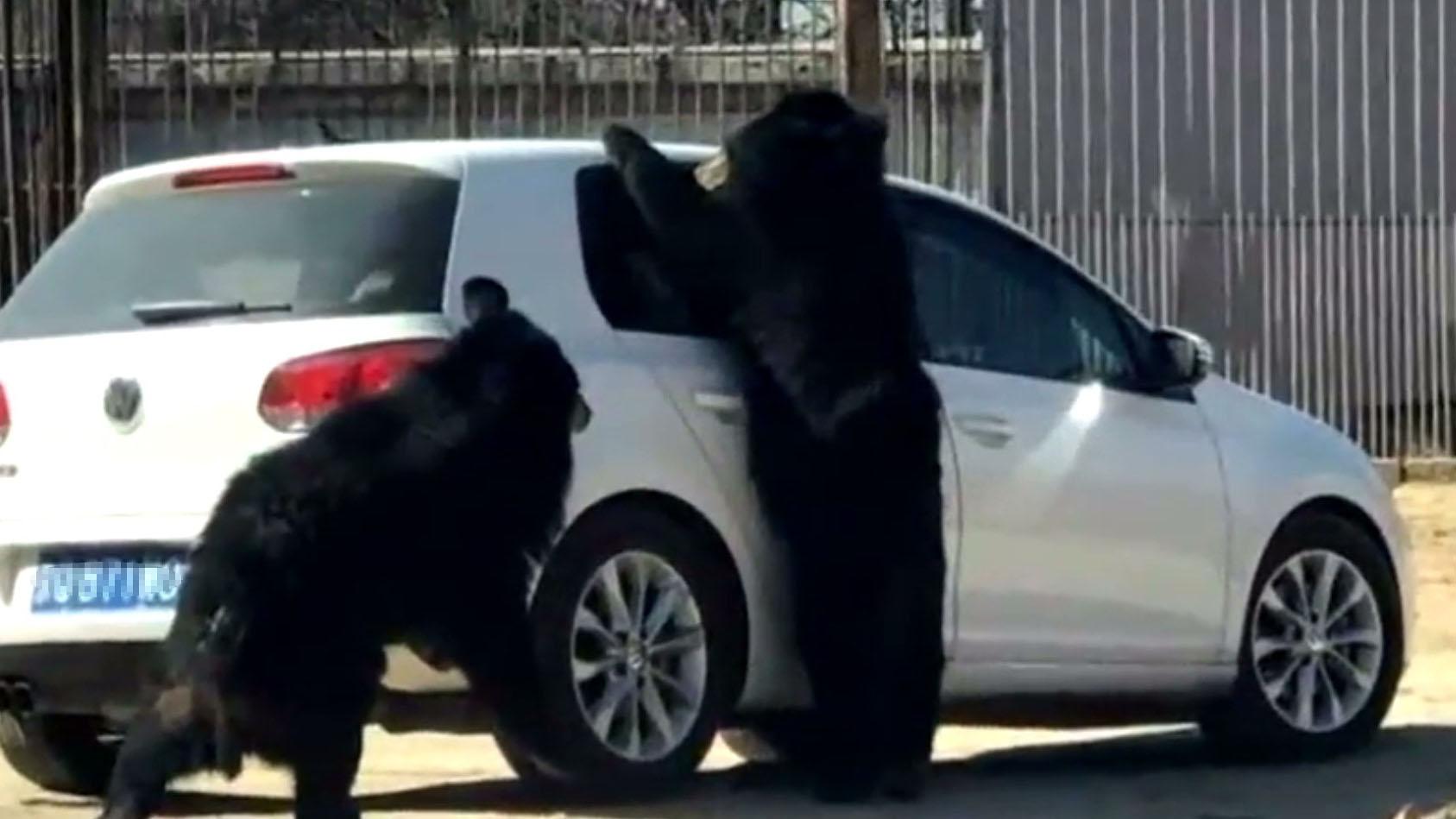 北京拟推新规:野生动物园自驾专道不能接触猛兽