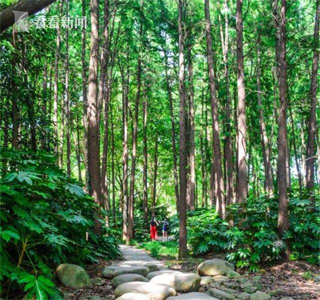 2017中国森林旅游节落户上海 9月25日~27日精