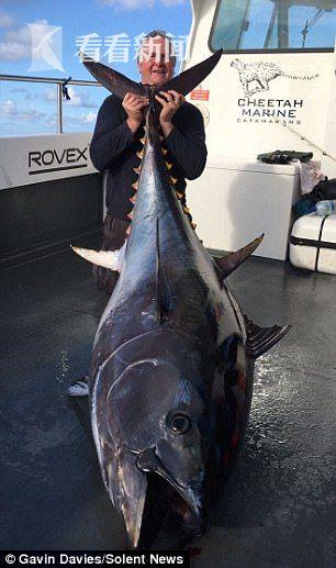 226公斤!缠斗135分钟 英国男子钓起蓝鳍金枪鱼又将其放生