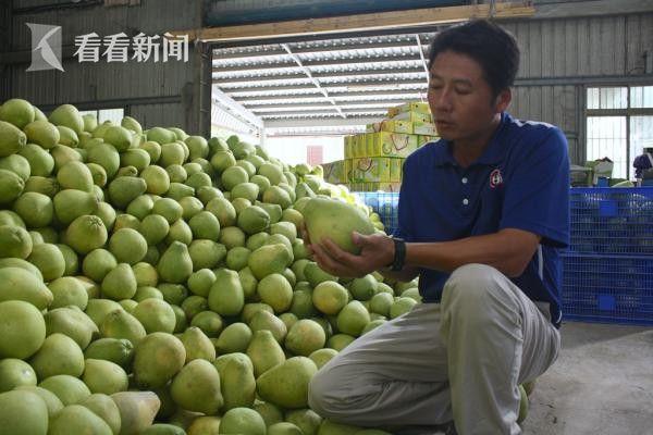 滞销在仓库的万斤柚子