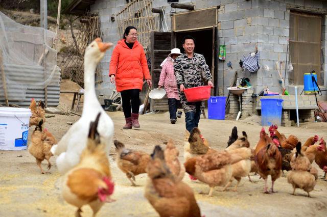 2017年3月6日,安徽省岳西县和平乡和平村第一书记、驻村扶贫工作队队长王珍(左)在贫困户开办的养鸡场了解情况。 (新华社记者 刘军喜 摄)
