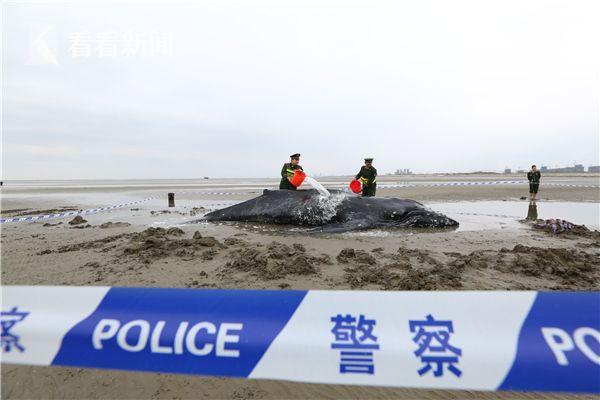 鲸鱼1.jpg