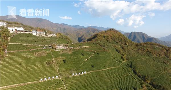 林廷洪开办的茶园