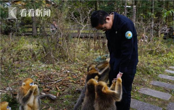 姚辉喂食金丝猴