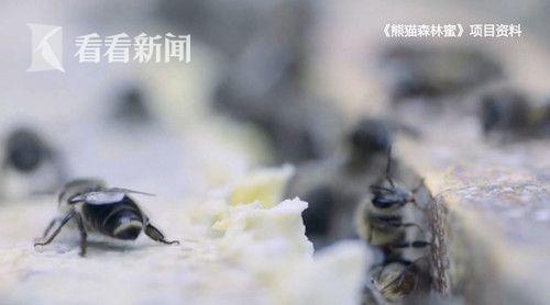 熊猫森林蜜.jpg