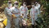 视频|云南蝙蝠揭示SARS起源 科研成果在线发表国际权威期刊