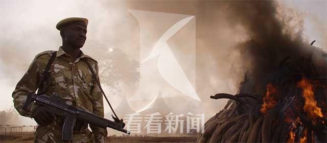 《象牙游戏》资料图片-焚烧象牙