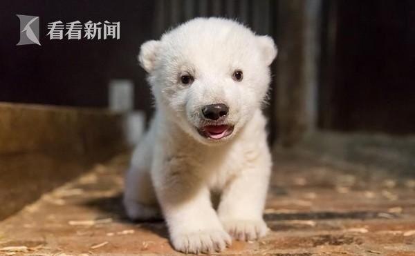 小北极熊Fritz