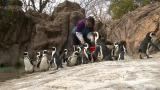 """【爱申活 暖心春】企鹅妈妈金俊和她的""""饲养员""""一家"""