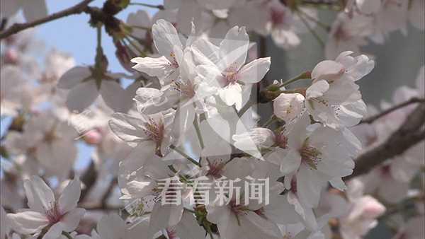 宣克炅 火灾樱花13_副本.jpg