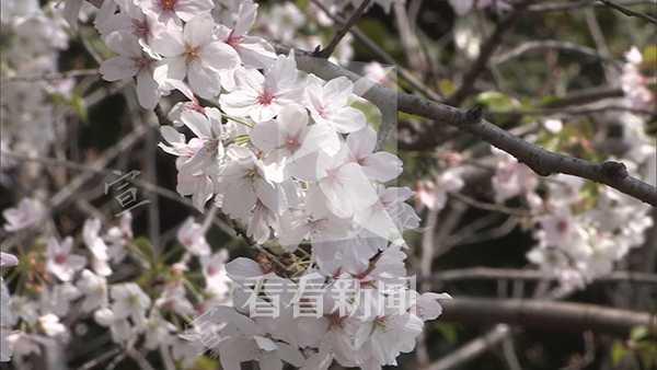 宣克炅 火灾樱花134_副本.jpg