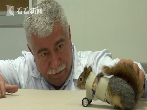视频 身残志坚小萌物 截肢松鼠靠小轮椅 健步如飞