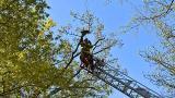 爱猫成痴!男子爬9米高树上救猫 自己卡住下不来