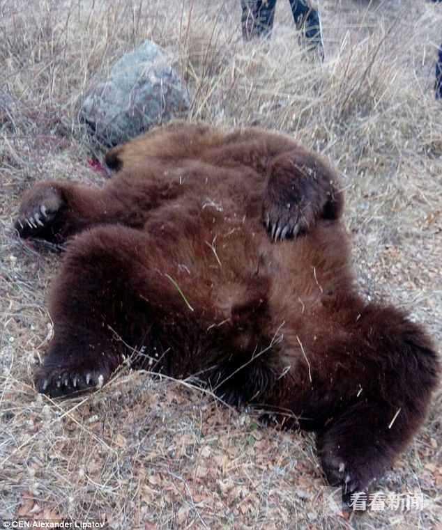 棕熊5.jpg