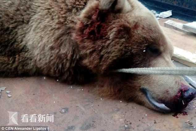 棕熊2.jpg