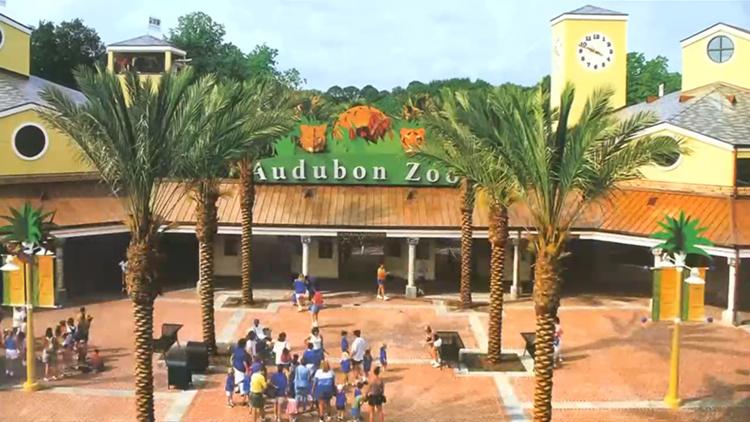 美国一动物园美洲虎