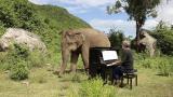 """萌!钢琴家为盲象弹奏 却""""欺负""""小象吹口风琴"""