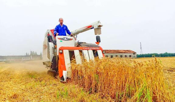 李春风在自家农场打理稻谷