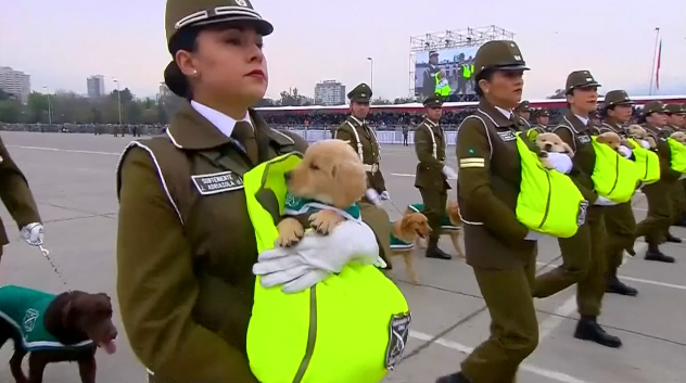 高萌预警!智利女兵怀抱45天小奶狗参加阅兵式