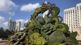 冲刺进口博览会 1300多万盆鲜花营造喜庆氛围