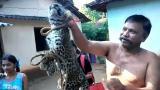 村民发现小花豹 竟把它五花大绑带回村供人把玩