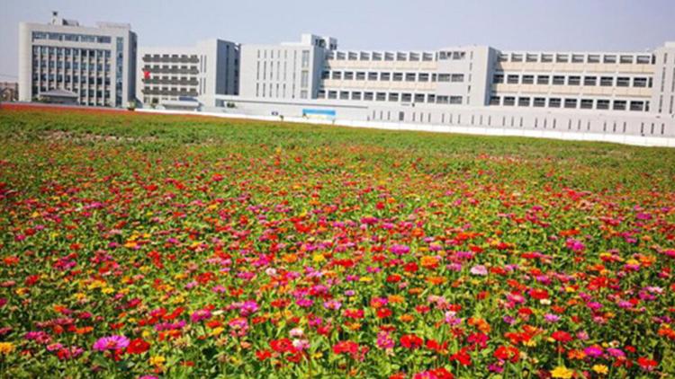 """上海160多公顷""""抛荒地""""变身烂漫花海"""