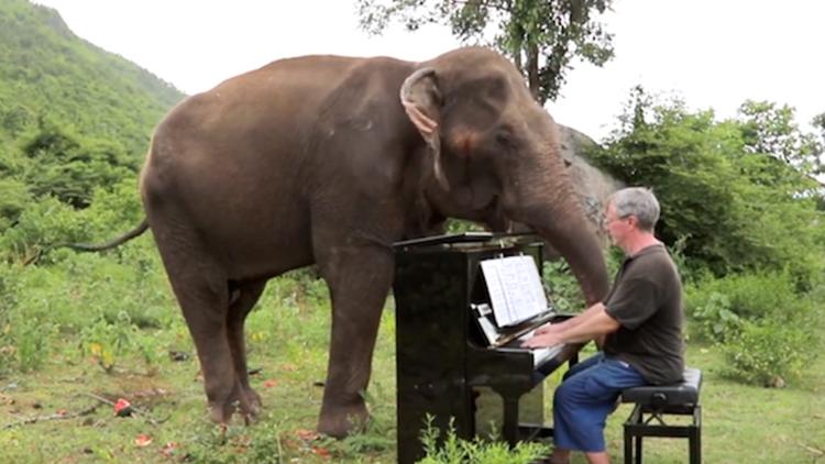 看到这些饱受虐待的大象们 他决定为它们弹琴