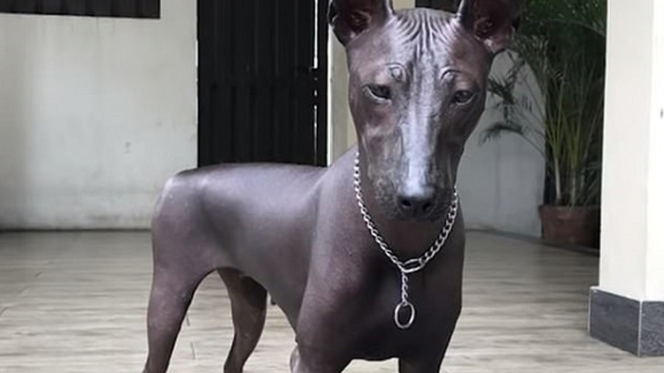 雕塑狗狗傻傻分不清?这张照片让网友凌乱了