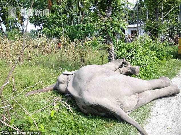 大象2.jpg