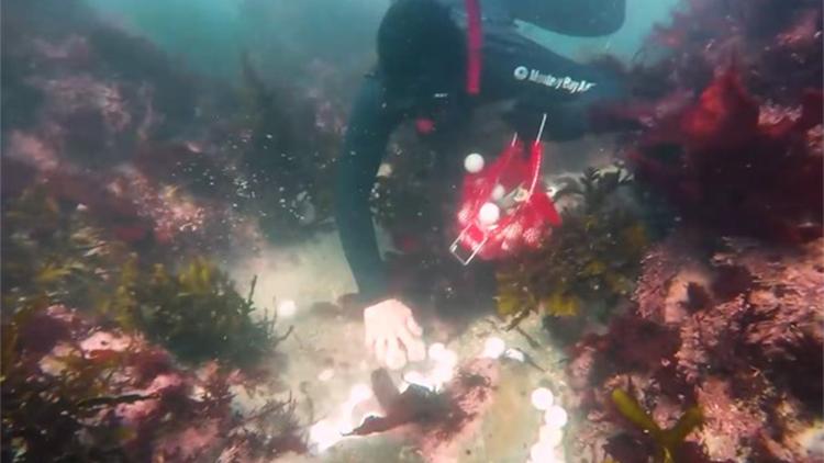 一片白!海底铺满高尔夫球 高中生2年捞出5万颗
