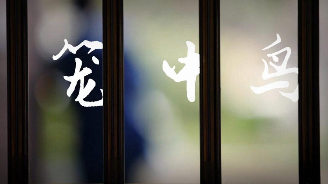 《人间世2》⑥:笼中鸟