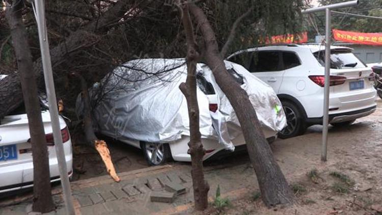 两棵大树接连倒下压坏4辆轿车 疑安装管道所致