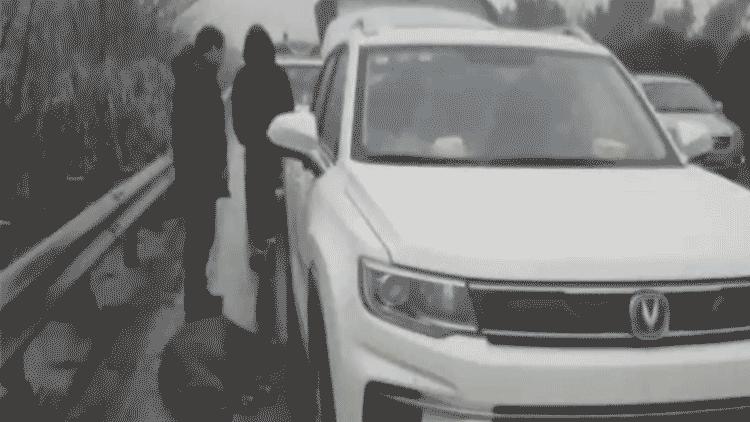 高速上遭遇野猪 这名女司机的反应被交警点赞了