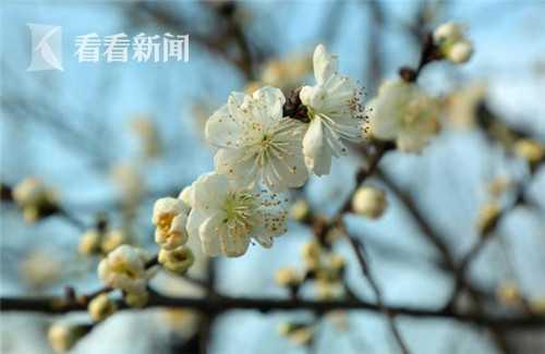 IMG_8102_副本.jpg