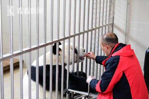 爱心饲喂大熊猫园园.JPG