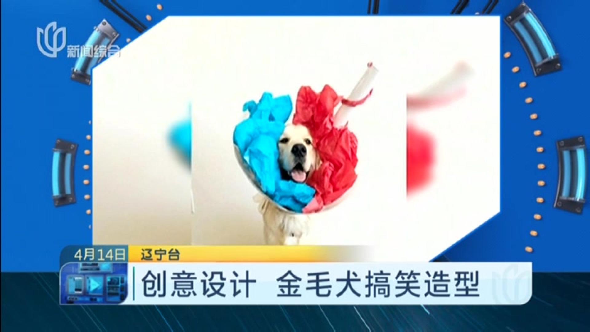 媒体|创意设计金毛犬搞笑造型_食品大搜索_看外包装设计箱视频图片