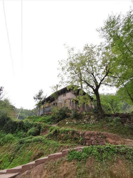 """沿着这条""""之""""字形的路爬上半山腰,就到了谭登周家。"""