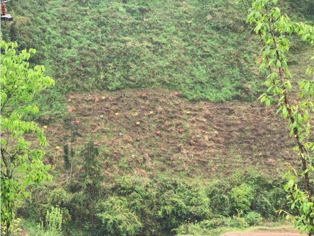山间这些彩色的地点就是蜜蜂的家。华溪村蜜源植物种类多达30余种,适宜发展蜂蜜产业。