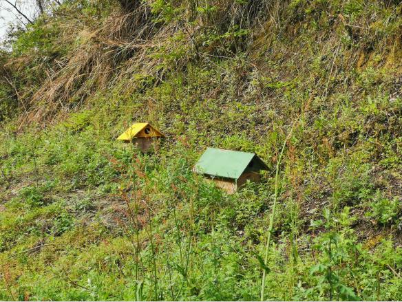 华溪村山坡上的蜂箱。