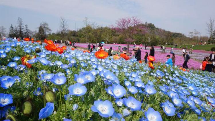 谷雨三朝看牡丹 暮春花卉接力四月春色