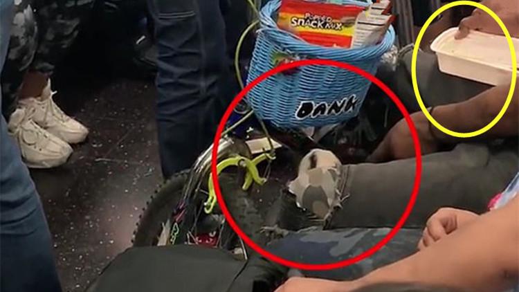 诡异!地铁车厢老鼠坐男子腿上 狂食外卖不怯生