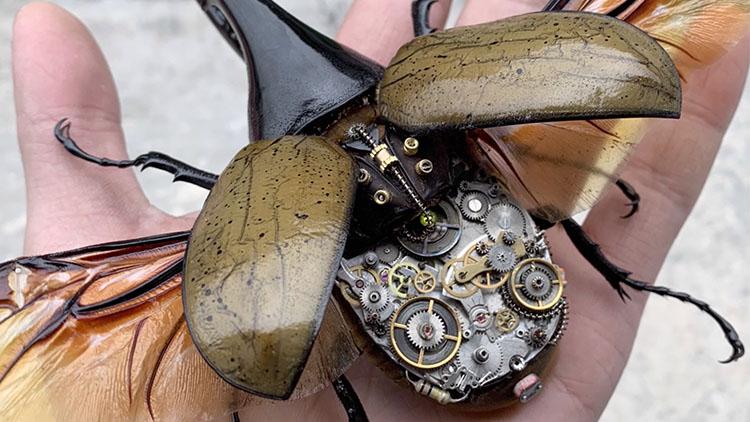 """一只死昆虫卖1600元?小伙用机械让它""""活过来"""""""