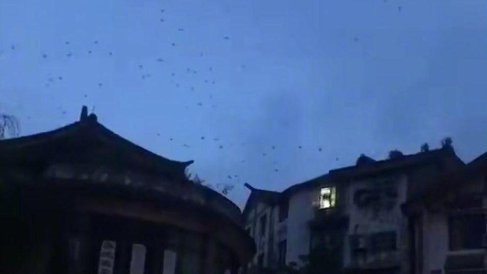 长宁震区燕子成群飞舞 四川省地震局权威发声