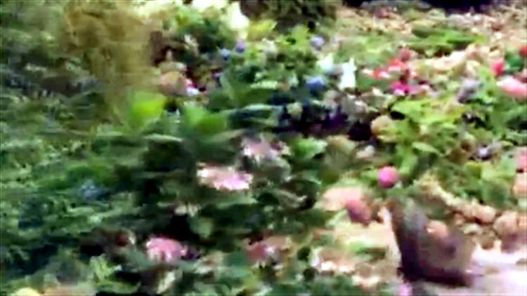 锦绣中华·大美山川——隐藏在共青森林公园里的花神下凡的仙境八仙花园